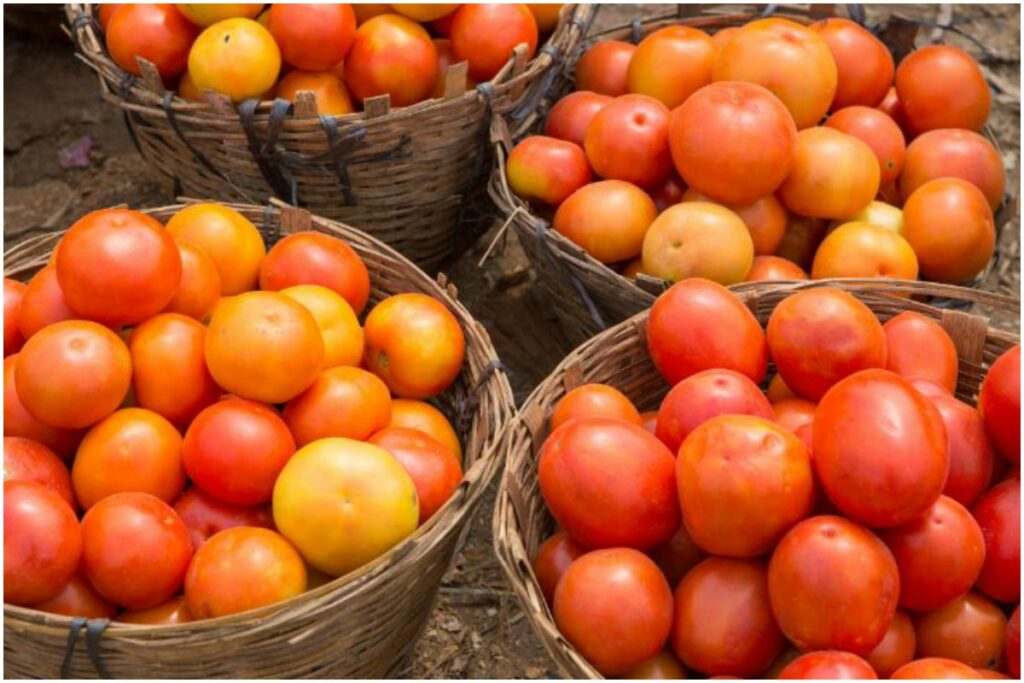 Tomato Benefits In marathi