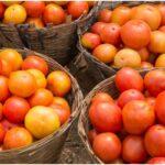 Tomato Benefits In marathi