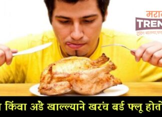reason of bird flu chicken or egg harmfull what why how marathi trends